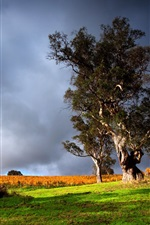 Preview iPhone wallpaper Nature scenery, green grass, old tree, thunder clouds, sky