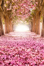 Pink indus flowers, path, trees, beautiful scenery