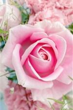 Preview iPhone wallpaper Pink rose, beautiful flowers