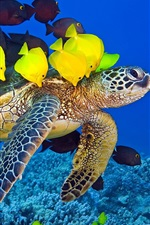 Preview iPhone wallpaper Sea turtle, ocean, underwater, yellow and brown fish