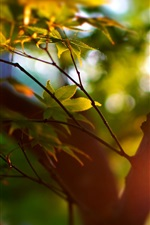 Preview iPhone wallpaper Summer, trees, bokeh, leaves, sunlight