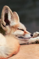 Preview iPhone wallpaper Two sleeping foxes