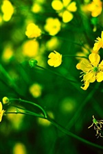 Preview iPhone wallpaper Yellow little flowers, green background