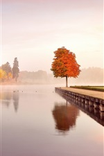 Preview iPhone wallpaper Autumn nature landscape, trees, orange, water, morning, mist