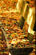Preview iPhone wallpaper Autumn nature park, bench, table, fall leaves