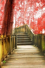 Autumn park, walkway, stairs, trees, red leaves