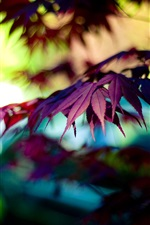 Preview iPhone wallpaper Autumn purple maple leaves, bokeh