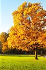 Preview iPhone wallpaper Autumn trees, beautiful garden, yellow leaves, green grass, sunlight