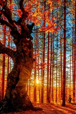 Preview iPhone wallpaper Beautiful autumn sunset forest, trees, red leaves