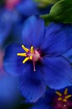 Blue wild flower close-up
