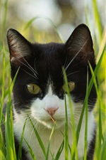 Preview iPhone wallpaper Cat in the grass, black and white