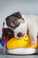 Preview iPhone wallpaper Cute puppy sleep on shoes