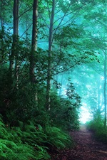 Preview iPhone wallpaper England, early morning forest, fog, blue
