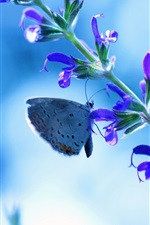 Preview iPhone wallpaper Flower with butterfly, blue glare