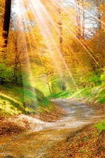 Preview iPhone wallpaper Golden autumn leaves, yellow, forest, trees, walkway, sunlight