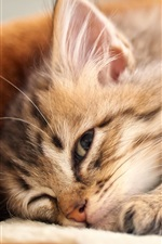 Preview iPhone wallpaper Kitten lying down to sleep