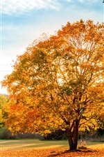 Preview iPhone wallpaper Landscape, nature autumn, trees, yellow leaves, blue sky
