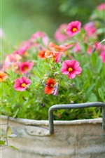 Preview iPhone wallpaper Little flowers in the bucket, green background