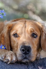 Preview iPhone wallpaper Lonely dog and flowers