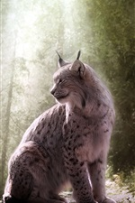 Preview iPhone wallpaper Lynx, wild cat, forest, light