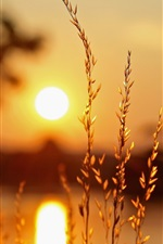Preview iPhone wallpaper Macro plants, sunset, light, blur background