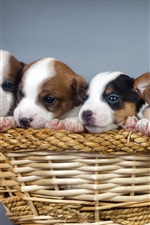 Preview iPhone wallpaper Many dogs, puppies, basket