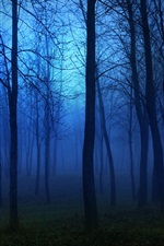 Preview iPhone wallpaper Morning forest, fog, trees, blue