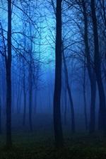 Morning forest, fog, trees, blue