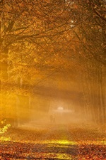 Preview iPhone wallpaper Nature autumn, road, trees, yellow leaves, fog, sunlight