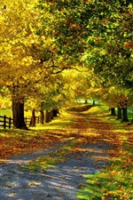 Preview iPhone wallpaper Nature autumn, yellow leaves, trees, road, fence