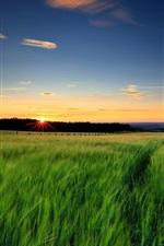 Preview iPhone wallpaper Nature landscape, green grass, wheat fields, sunset, evening, sky