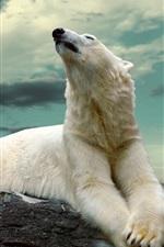 Preview iPhone wallpaper Polar bear, rocks, dusk