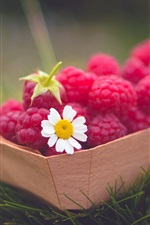 Preview iPhone wallpaper Red raspberries, berry, daisy, grass, green