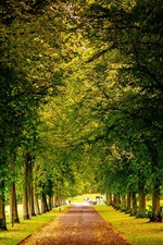 Preview iPhone wallpaper Sheffield, England, park, trees road, autumn, yellow leaves