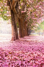 Trees, road, many pink flowers on the ground