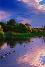 Preview iPhone wallpaper USA, Kansas, Wichita, Chisholm Creek Park, sunset, lake, trees, ducks