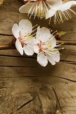 Branco flores de cerejeira sobre a mesa