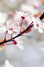 Preview iPhone wallpaper White flowers, spring trees