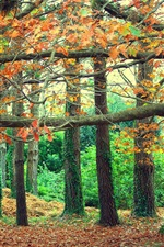 Parque do outono, as folhas amarelas, banco