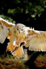 Preview iPhone wallpaper Bird wings, owl flight