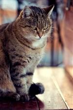 미리보기 iPhone 배경 화면 고양이 모양, 나무 보드, 앉아