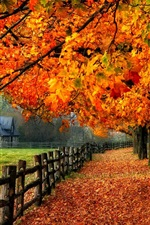 Preview iPhone wallpaper Colorful autumn, red leaves, path, grass, house