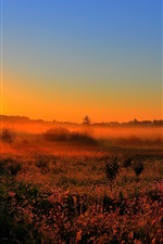 Preview iPhone wallpaper Early morning, dawn, sun, fog, fields, trees, nature