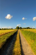 Preview iPhone wallpaper Footpath, road, sunny day, fields, clouds, summer