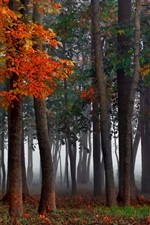 iPhone fondos de pantalla Forestales, niebla, otoño, árboles