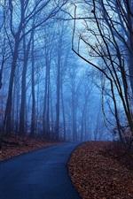 Árvores de floresta, manhã de outono, amanhecer, azul, névoa, folhas, estrada