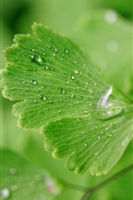 Preview iPhone wallpaper Green leaves, water drops, nature