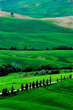 Preview iPhone wallpaper Italy, Tuscany, spring scenery, fields, road, trees, green