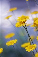 Little yellow flowers macro photography