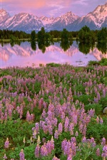 Preview iPhone wallpaper Mountains, lake, pink flowers, meadow, fields, water reflection, sunset